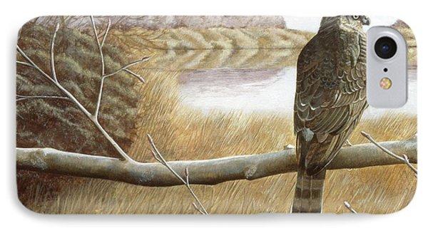 Marsh Hawk IPhone Case by Laurie Stewart