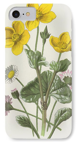 Marsh Marigold And Daisy IPhone Case by Frederick Edward Hulme