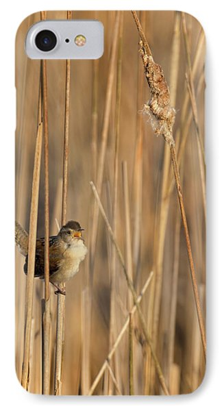 Marsh Wren IPhone Case by Bill Wakeley