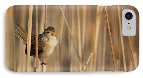 Marsh Wren Square IPhone 7 Case by Bill Wakeley