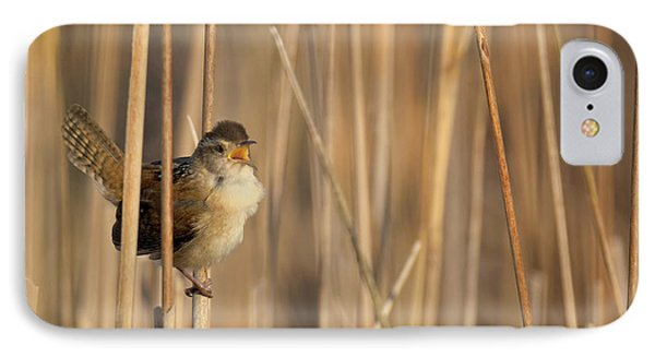 Marsh Wren Square IPhone Case by Bill Wakeley