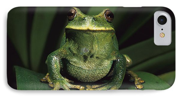 Marsupial Frog Gastrotheca Orophylax IPhone Case by Pete Oxford