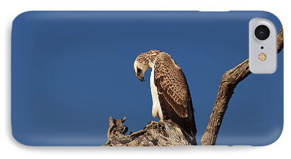 Martial Eagle IPhone Case
