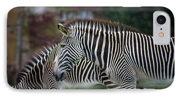 Marwell Zoo Zebras IPhone Case by Martin Newman