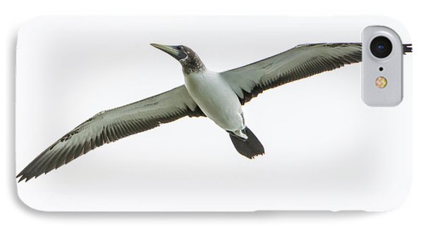 IPhone Case featuring the photograph Masked Booby 02 by Werner Padarin