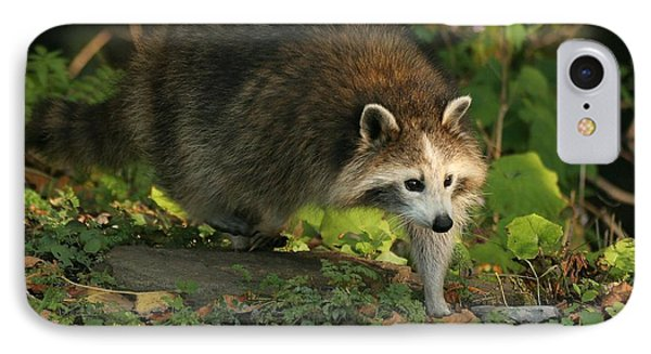 IPhone Case featuring the photograph Maskless Raccoon by Doris Potter