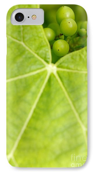 Maturing Wine Grapes Phone Case by Gaspar Avila