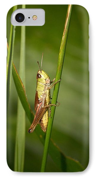 IPhone Case featuring the photograph Meadow Grasshopper by Jouko Lehto