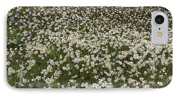IPhone Case featuring the photograph Meadow Of Daisey Wildflowers Panorama by James BO Insogna
