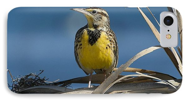 Meadowlark iPhone 7 Case - Meadowlark Beauty by Fraida Gutovich
