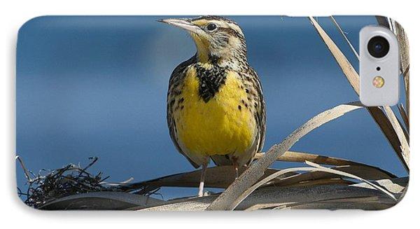 Meadowlark iPhone 7 Case - Meadowlark Beauty by Fraida Gutovich