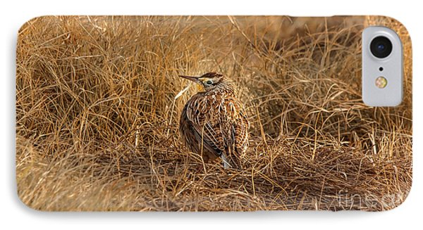 Meadowlark Hiding In Grass IPhone 7 Case by Robert Frederick