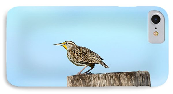 Meadowlark iPhone 7 Case - Meadowlark Roost by Mike Dawson