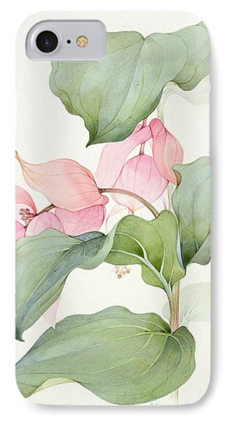 Medinilla Magnifica IPhone Case by Sarah Creswell