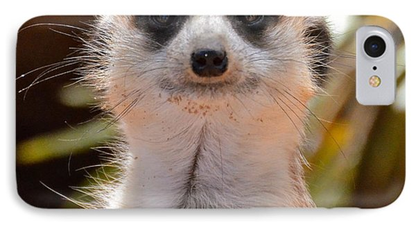 Meerkat IPhone Case by Carol  Bradley