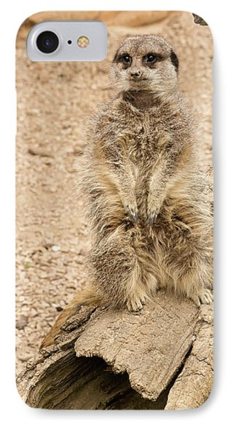 IPhone Case featuring the photograph Meerkat by Chris Boulton
