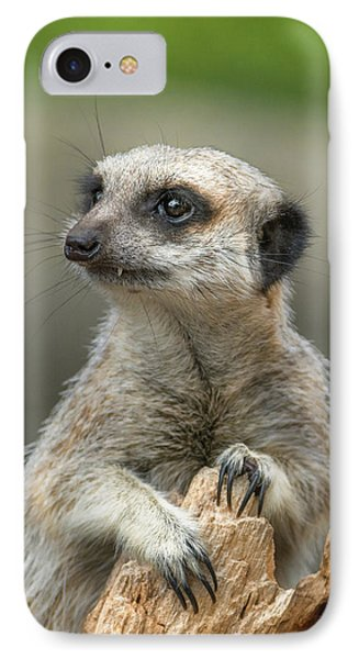 Meerkat iPhone 7 Case - Meerkat Model by Racheal  Christian