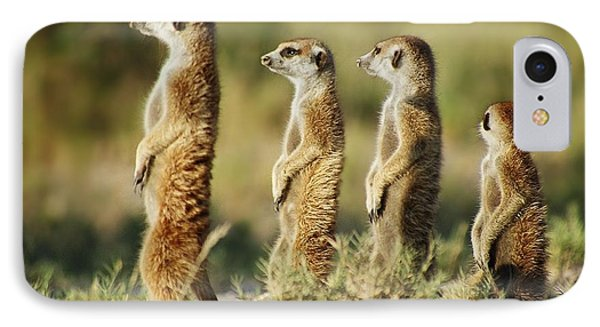 Meerkat Stairsteps IPhone Case