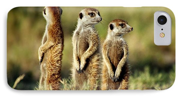 Meerkats Three IPhone Case
