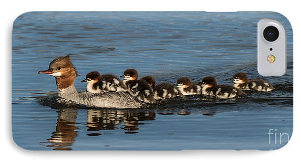Meet The Mergansers IPhone Case by Mitch Shindelbower