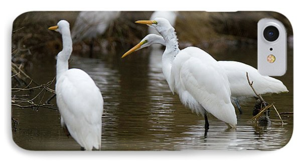 Meeting Of The Egrets IPhone Case by George Randy Bass