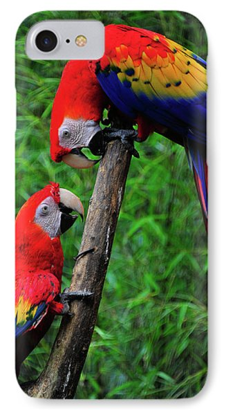 Meeting Of The Macaws  Phone Case by Harry Spitz