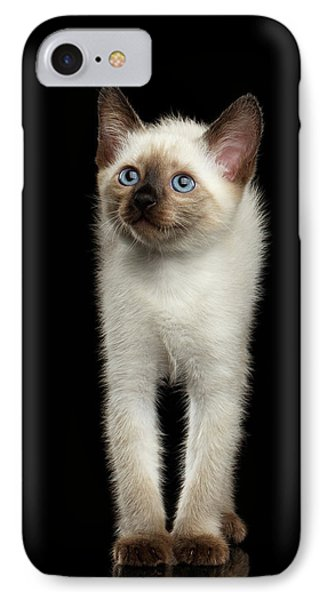 Mekong Bobtail Kitty With Blue Eyes On Isolated Black Background IPhone Case by Sergey Taran