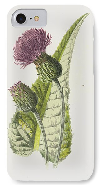 Melancholy Thistle IPhone Case