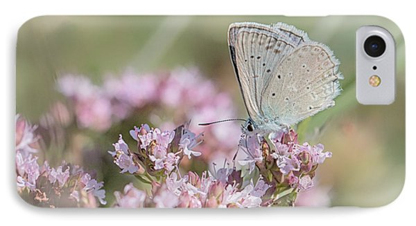 Meleagers Blue Butterfly IPhone Case by Jivko Nakev
