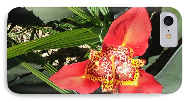 Mexican Orchid IPhone Case by Matthew Bamberg