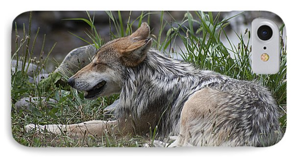 Mexican Wolf 20120714_112a IPhone Case by Tina Hopkins