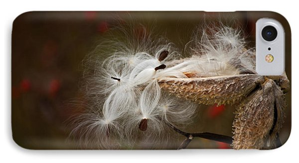 Milkweed Pods IPhone Case by Elsa Marie Santoro