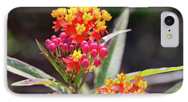 Milkweed Silky Deep Red Phone Case by Louise Heusinkveld