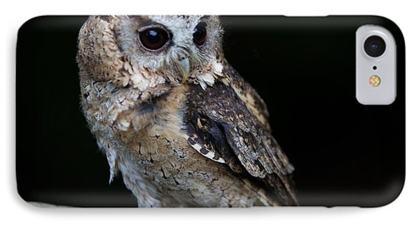 Minature Owl IPhone Case by Gary Bridger