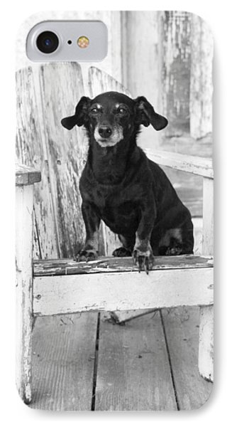 Miniature Dachshund Dog Sitting On An Adirondack Chair In Front  IPhone Case by Marie Dolphin