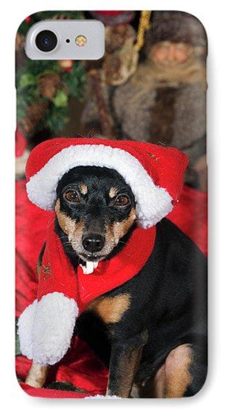 Miniature Pinscher Wishing A Merry Christmas IPhone Case by Christian Lagereek