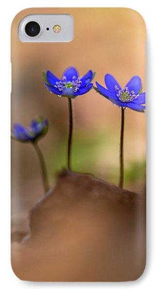 IPhone Case featuring the photograph Minimalistic Impresion With Liverworts by Jaroslaw Blaminsky
