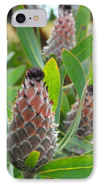 Mink Protea Flower IPhone Case by Rebecca Margraf