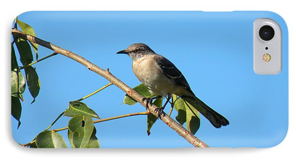 Mocking Bird Out On A Limb IPhone Case by Rosalie Scanlon