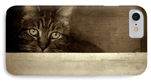 Mollie In A Box IPhone Case by Patricia Strand