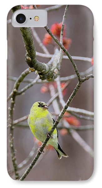 IPhone 7 Case featuring the photograph Molting Gold Finch by Bill Wakeley