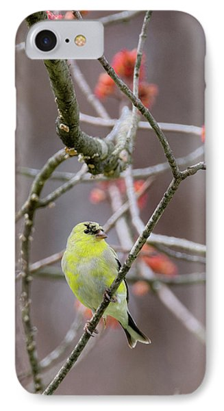 Molting Gold Finch IPhone Case