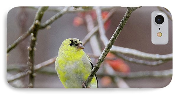 IPhone Case featuring the photograph Molting Gold Finch Square by Bill Wakeley