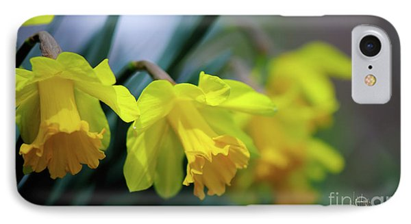IPhone Case featuring the photograph Mom's Daffs by Lois Bryan