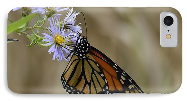 IPhone Case featuring the photograph Monarch 2015 by Randy Bodkins