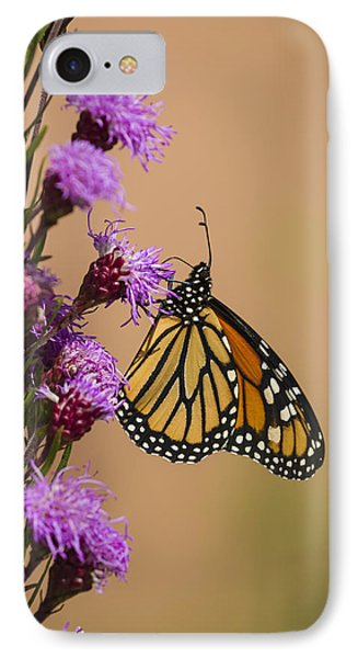 Monarch And Blazing Star 2013-1 IPhone Case by Thomas Young