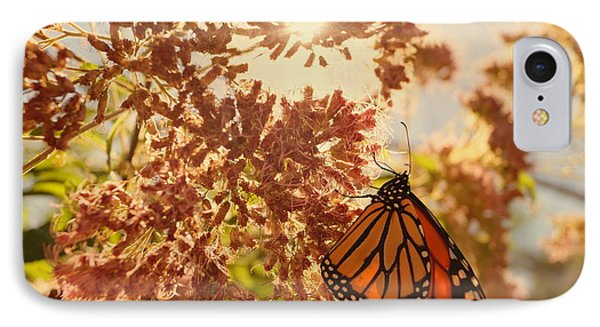 Monarch Beauty IPhone Case by Beth Collins