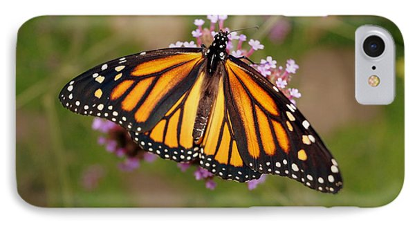Monarch Butterfly IPhone Case by Beth Collins