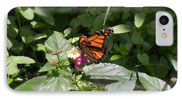 IPhone Case featuring the photograph Monarch Butterfly Feeding by Carol  Bradley
