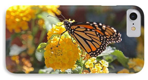 Monarch Butterfly On Lantana IPhone Case